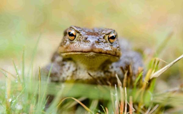 Психология школы: как сварить лягушку заживо
